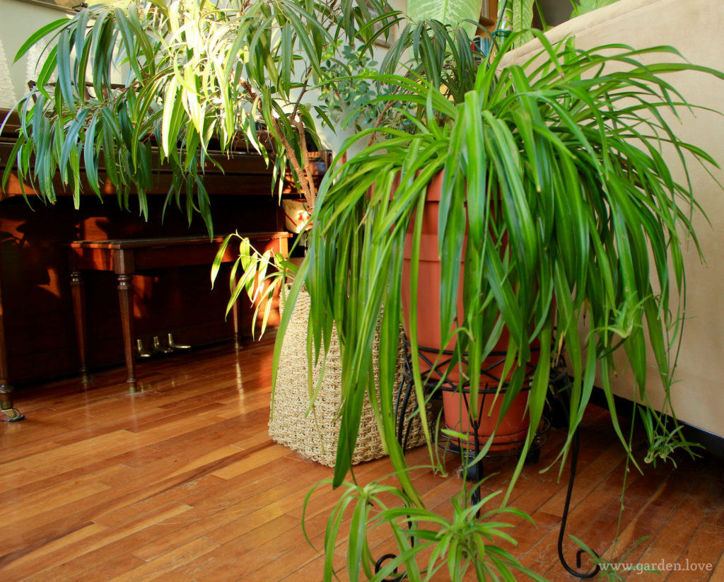 Indoor plants:  The benefits will surprise you
