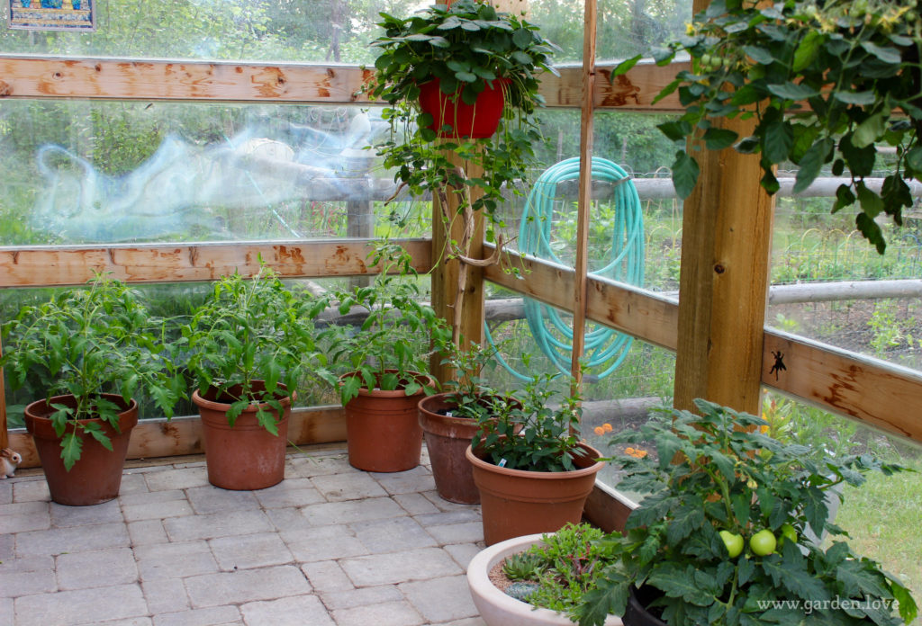 Vegetables in the greenhouse