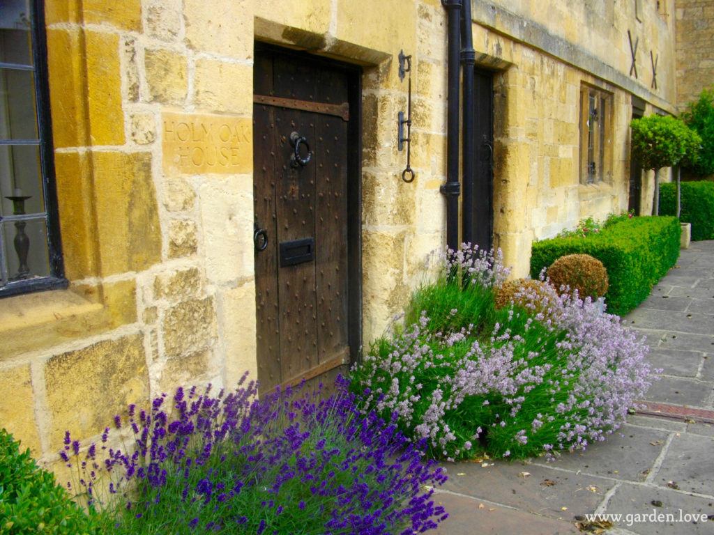 Lavender and boxwood hedges
