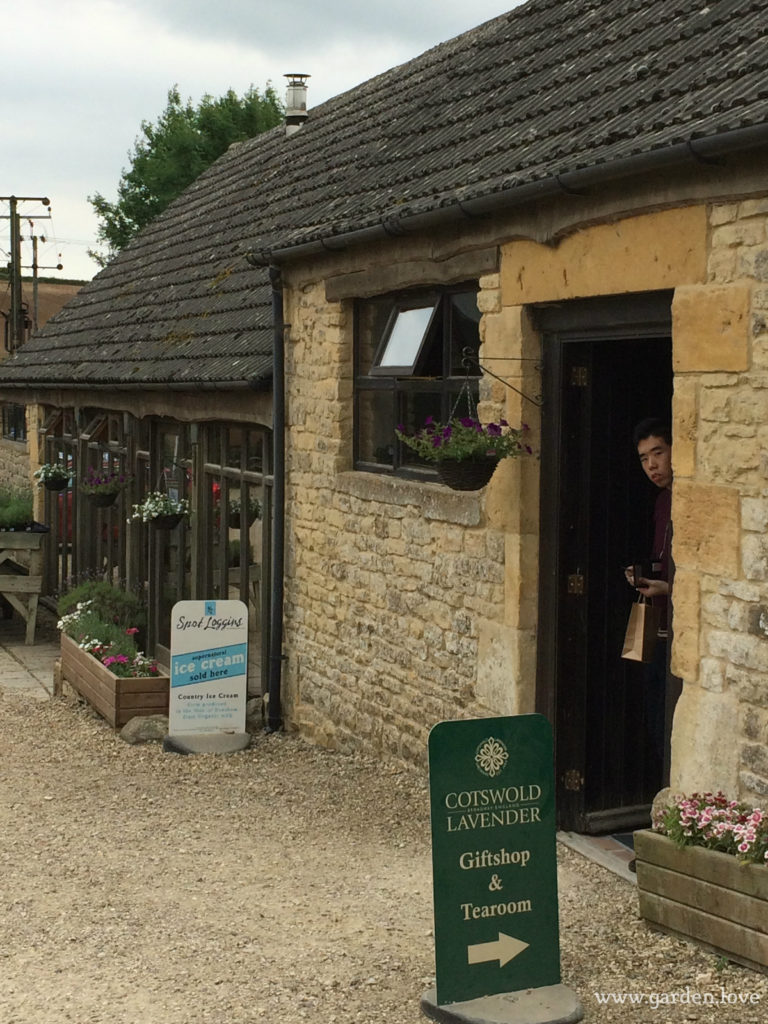 Lavender gift shop and tea room