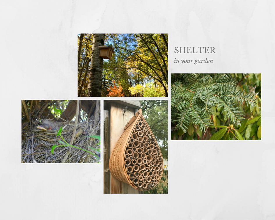 shelter in your garden